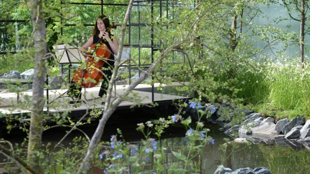 Cellist Jenny Dowdall playing in FBD Insurance's Transition designed by Oliver and Liat Schurmann, at a preview of Bord Bia's Bloom. Photograph: Dara Mac Dónaill/The Irish Times