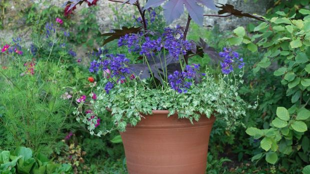 One large handsome, well-planted container is worth a hundred small ones