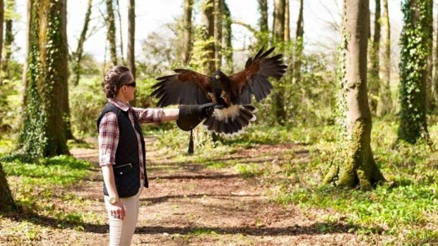 Falconry at Knockranny House Hotel