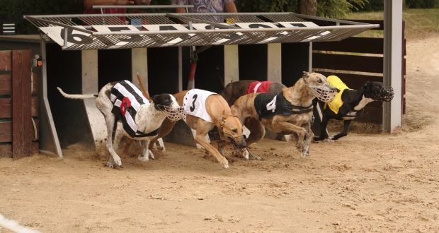 Gone To The Dogs Greyhound Racing Faces Brexit Challenge