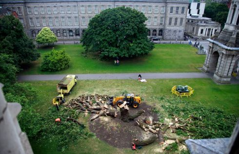 General view from Library Square in Trinity College as an Oregon Maple tree in the Square at Trinity College came down overnight. Photograph: Nick Bradshaw