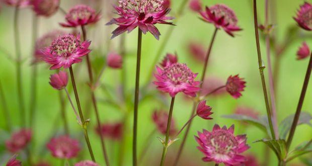 Eight great long,flowering plants for the June garden
