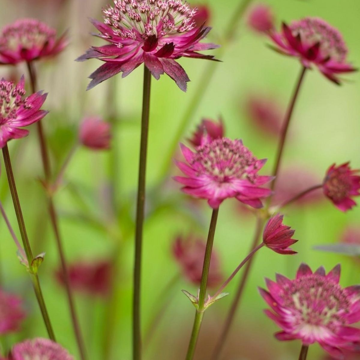 Eight Great Long Flowering Plants For The June Garden