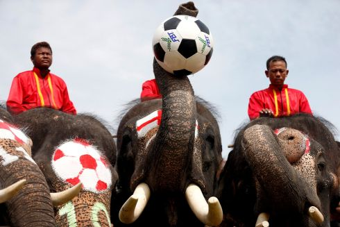 BIG SOCCER FANS: Elephants play soccer during an anti-gambling campaign targeting schoolchildren in Ayutthaya, Thailand. Photograph: Soe Zeya Tun/Reuters