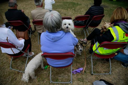 PUPPY POETRY: People celebrate WB Yeats's birthday in Sandymount, Dublin. Photograph: Nick Bradshaw