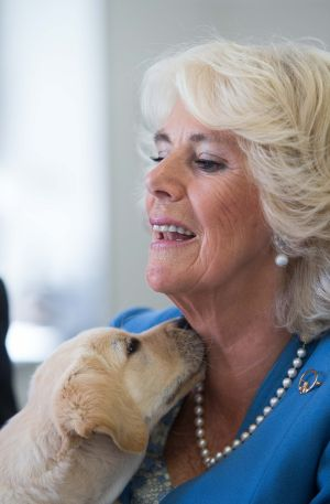 The Duchess of Cornwall with Gretta, a nine-week-old puppy. Photograph: Julien Behal