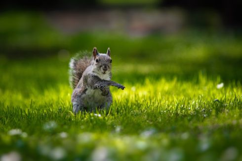"Exercising Squirrel by Sandro Alencar: ""Squirrels are quite easy to find around public parks in Ireland, and so, with some patience, you will be able to see them doing lots of acrobatic positions as this one. Botanic Garden, Dublin."""