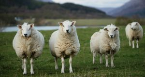 Agricultural science faced a series of detailed questions ranging from soil conditions to sheep rearing. Photo: iStock