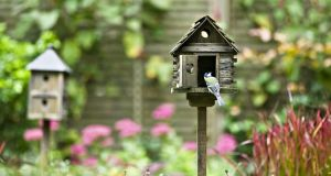 """We decided to eschew blissful ignorance on all things feathery and get up close and personal this spring by erecting a nest-box right outside our back door."" Photograph: Getty Images"