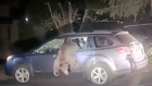 Looking for pic-a-nic baskets? Bear rescued from SUV in California