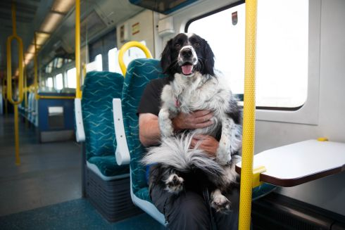 Gerry Gormley and Millie on the train to Drumcondra for Dog Friendly Ireland Day with Dogs Trust. Photograph: Fran Veale