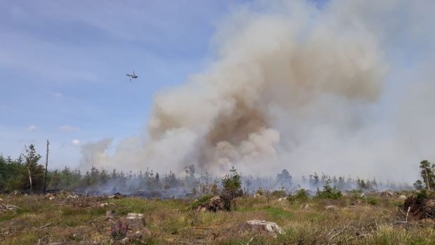 Fire services work to put out a forest fire near Saggart. Photograph: Dublin Fire Brigade