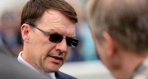 Aidan O'Brien's Saxon Warrior is a 1-2 favourite to win the Irish Derby. Photograph: Inpho