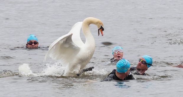 Image result for triathy 2019