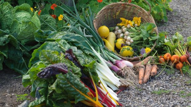 Freshly harvested produce in the walled kitchen garden of Burtown House in Co Kildare. Photograph: Richard Johnston