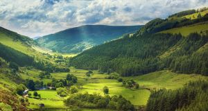 Forestry in Glenmacross Valley, Co Wicklow. There are few mature trees in Ireland, let alone of native species.    Photograph: istock