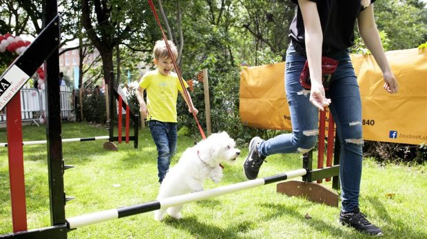Dogs get a special welcome at the Pet-acular in both Dublin and Cork.
