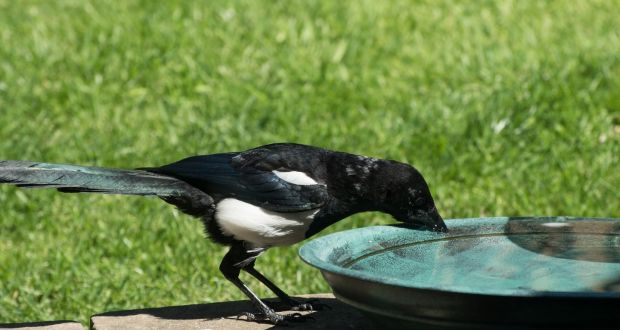 Shadow of a drought: how to help birds and plants survive