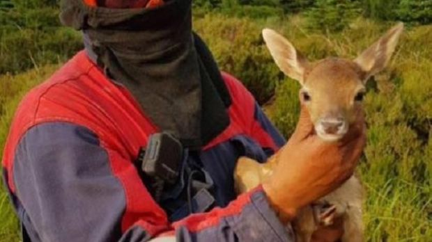 Offaly Fire and Rescue Service shared an image on its Facebook page of a baby fawn that was rescued from a fire in the Slieve Bloom Mountains on Wednesday.