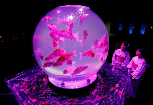 ART AQUARIUM: Women wearing traditional costumes look at installations with goldfish in illuminated tanks at Art Aquarium 2018, produced by Japanese Art Aquarium artist Hidetomo Kimura, in Tokyo. Photograph: Kim Kyung-Hoon/Reuters