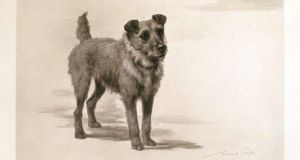 Jack, an Irish terrier who accompanied King Edward VII on his visit to Ireland in 1903. He is buried in the grounds of Áras an Uachtaráin.