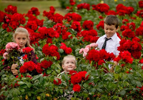 The annual rose festival at St Anne's Park in Raheny, Dublin. Photograph: Chris Bellew/Fennell Photography