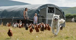 George the chicken dog with his flock of hens. Photograph: Alan Betson / The Irish Times