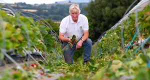 "Jimmy Kearns of Kearns Fruit Farm in Wexford: ""We lost 140,000 strawberry plants overall."" Photograph:  Mary Browne"