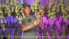 Martin O'Brien at Foxbury Farms, California, the medical cannabis growing farm he started in 2015
