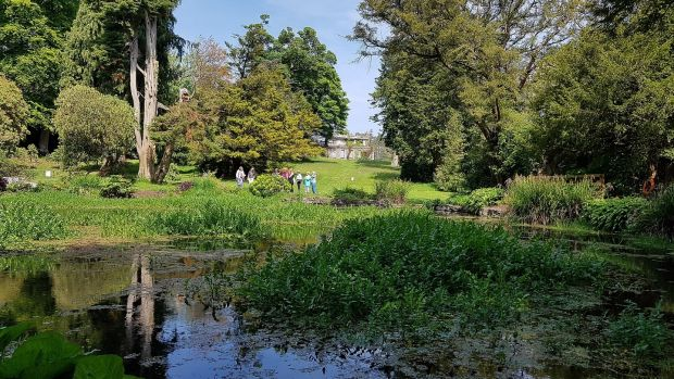 National Botanic Gardens, Kilmacurragh. Photograph: Wicklow Tourism