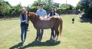 Jenny Gregg (left) Fergal Kelly and Erin McEvoy of Crafted Equestrian with horse Elvis.