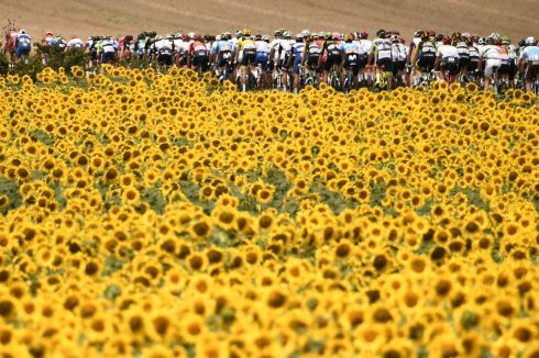 SUNNY SOUTHWEST: The Tour de France pack rides amid sunflower fields during the 16th stage of the 105th edition of the race, between Carcassonne and Bagneres-de-Luchon, southwestern France. Photograph: Marco Bertorello/AFP/Getty Images