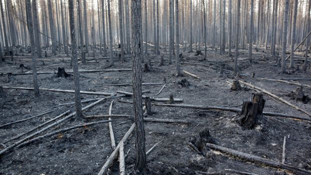 On July 22nd, a burnt forest near Angra, in Ljusdal, Sweden, after a major wildfire. Photo by Mats Andersson / TT News Agency / AFP/ Getty Images