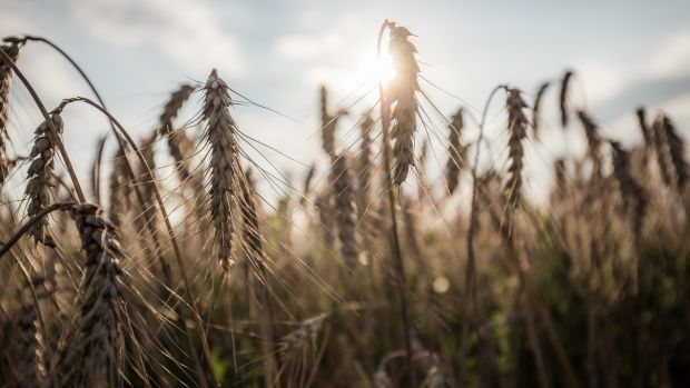 Government policy has two mutually contradictory aims: to increase the output of what might be called industrial-style farming while also reducing greenhouse gas emissions. Photograph: Akos Stiller/Bloomberg