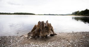 Trees stumps visible  on Blessington Lake due to lower water levels. Photograph: Tom Honan/ The Irish Times.