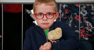 JUST STAY CALM: Eamon Larkin (6) with a chick in the poulty tent at the Tullamore Show.  Photograph: Nick Bradshaw for The Irish Times
