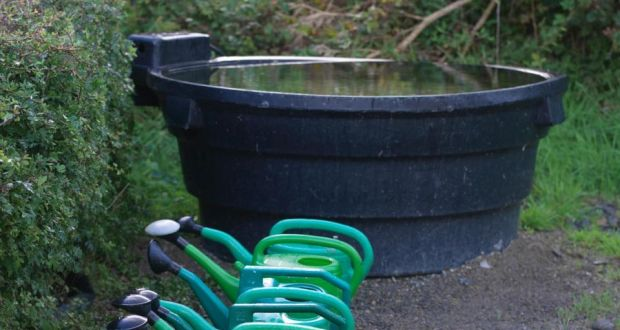 Harvest water: the garden will thank you