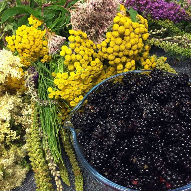 Field harvest: blackberries, tansy, weld, hemp agrimony, meadowsweet and buddleia from the Royal Canal in Dublin