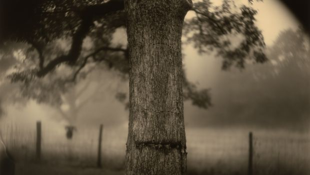 Sally Mann: a southern gothic sensibility imbued with romanticism.
