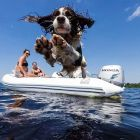 "Taken on a GoPro Hero5, this photo of Bailey the springer spaniel jumping into Lough Derg ""seemed to encapsulate this incredible summer"". Photograph: Louis Smith"