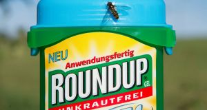 """Without these products, up to 80 per cent of the world's food production would be lost,"" says Miller. Above, Roundup. Photograph: Steffen Schmidt/EPA"