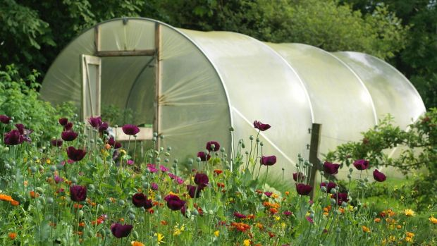 This is the time of year when opportunistic fungal and bacterial diseases and plant pests can easily become established in the polytunnel unless you're careful.