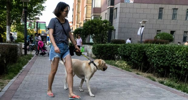 A dog's life in China as surge in middle classes creates