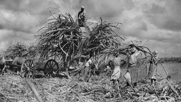 Washington Black is an epic historical novel which opens in the 1830s, on a sugar plantation in Barbados. Photograph: Fox Photos/Getty
