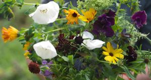 Gardening: Get next summer all sown up