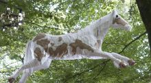 Unexpected discoveries: Patsy Preston's horse hangs in the trees. Photograph: Dave Meehan