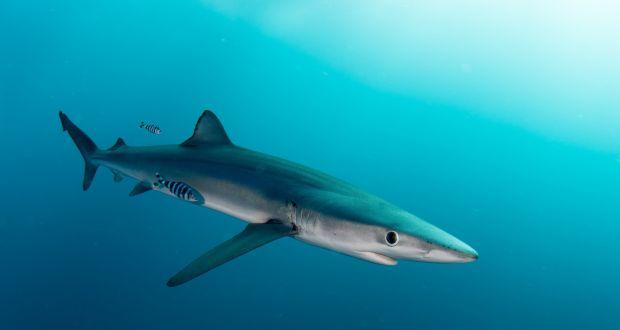 man bitten by shark while fishing off cork coast