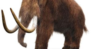 "If cloning a mammoth was to become possible, a living cell would be necessary ""to jump-start cellular specialisation and development"", Prof Beth Shapiro told the Schrodinger at 75 conference in Dublin."