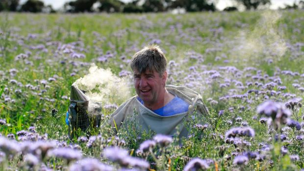 Beekeeper Dermot Fanning from Rathdrum, Co Wicklow. Photograph: Nick Bradshaw/ The Irish Times