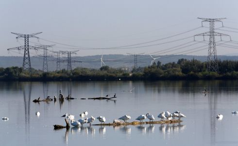 SWAN LAKE: Swans stand in the water near the Orano Melox nuclear fuel recycling plant in Marcoule, France.  Photograph: Jean-Paul Pelissier/Reuters